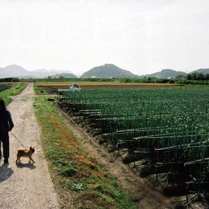 ええふるさと賞 「朝のさんぽ道」 中山 久司