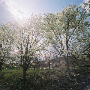 審査員特別賞 「春の風」 久保 涼子
