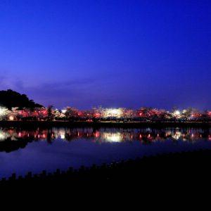 ええところ発見賞 「夜桜」 大道 昭