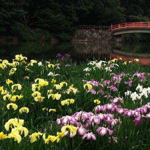 グランプリ 「花競ふ」 宮本 安紀子