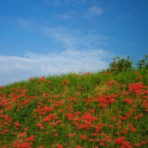 入選 「天上の花」 額田 みゆき