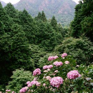 さぬき市議会議長賞 最優秀 「大窪寺の初夏」 石原 秀郎