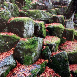 入選 「秋景」 松尾 正信