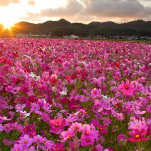 入選 「朝焼けの花園」 廣瀬 貴美子
