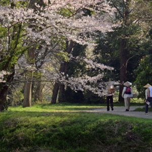 遍路道賞 「桜に迎えられ」 後藤 多美子