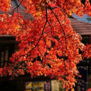 キッズ特別賞 「真っ赤な秋」 中山 瑠紀