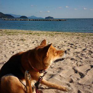 キッズ特別賞 「津田の海と犬」 泉 光