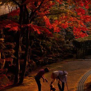 テーマ最優秀賞(心あたたまる一枚) 「秋光の出会い」 長谷 由美