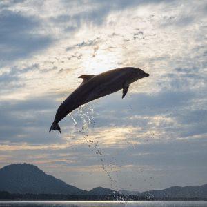 入選 「天高く舞う海豚」 有賀 忠幸