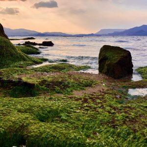 入選 「志度湾の岩海苔の浜辺」 doco_go