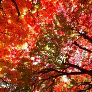 佳作 「大窪寺の紅葉」 akimrn