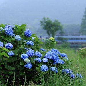 入選 「雨もまたよし」 y.kawai_d6