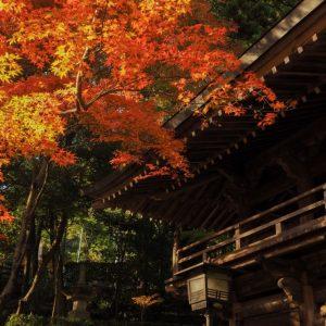 入選 「秋色に染まる」 maimai.phot