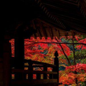 入選 「赤い舞台」 kamikoji